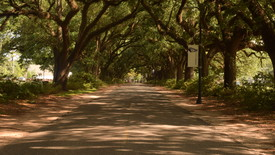 Spring Hill College's Avenue of the Oaks (photo: Marian Cook)