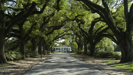 Spring Hill College's Avenue of the Oaks. (photo: )