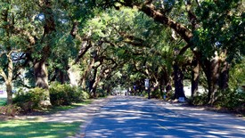 Avenue of the Oaks (photo: Dori Green)