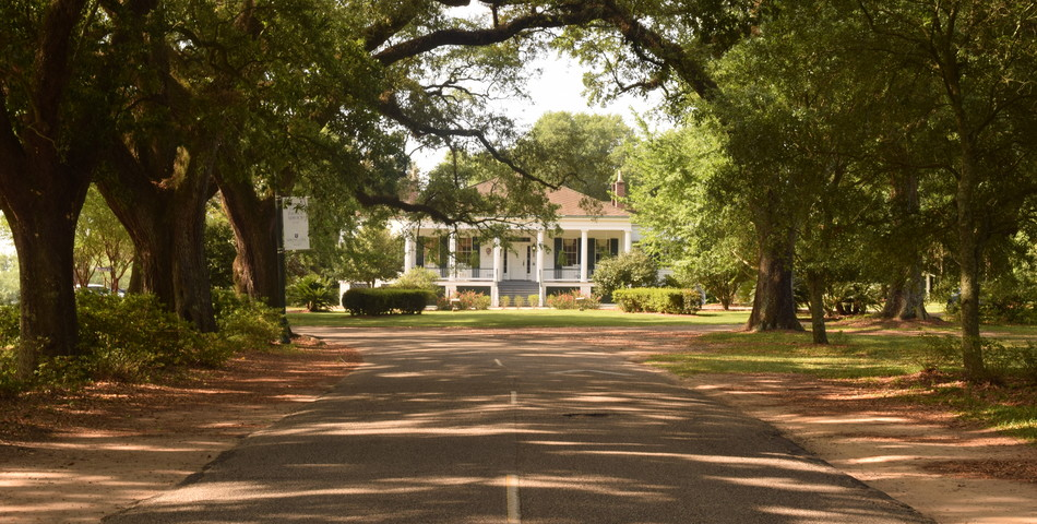 Marian Cook: Spring Hill College Avenue of the Oaks