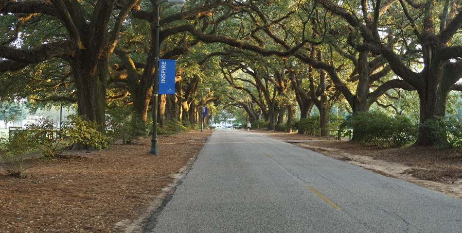 Avery Thayer: Avenue of the Oaks
