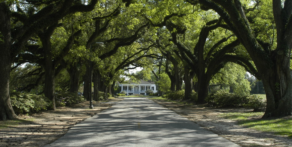 : Spring Hill College's Avenue of the Oaks.